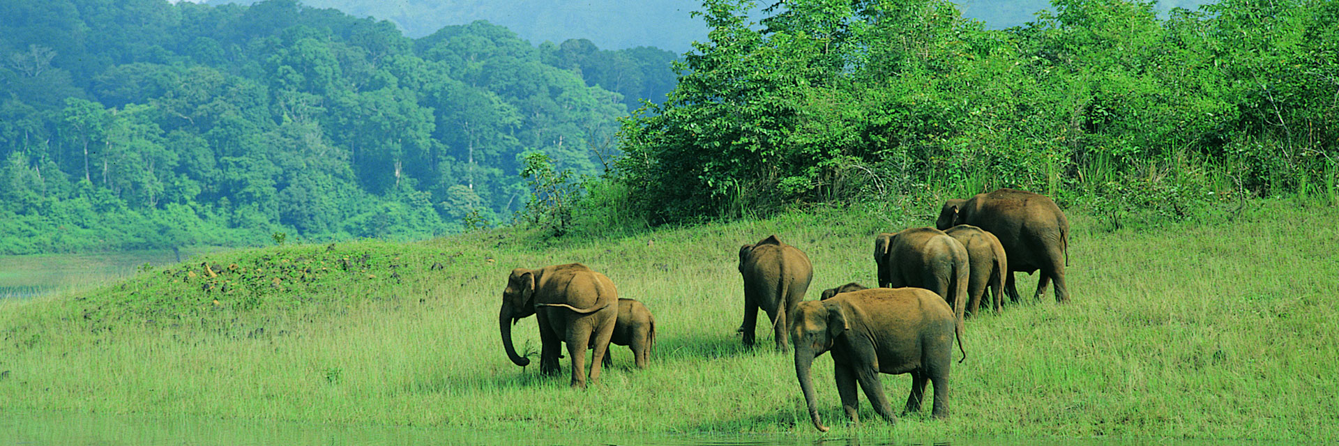 Wildlife Tour Tour Packages