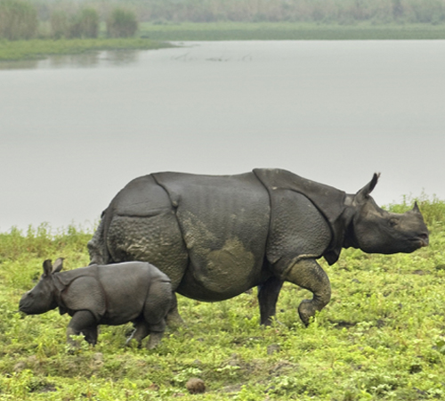 Assam Wildlife Tour